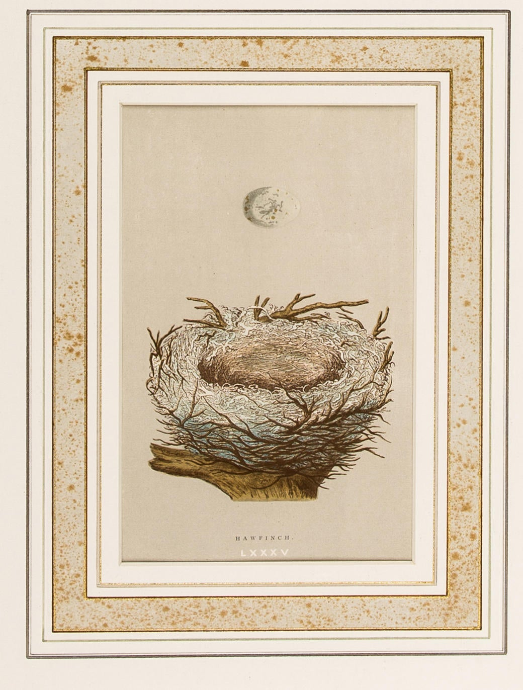 Hawfinch Nest Print Decor And Accessories Decor21230
