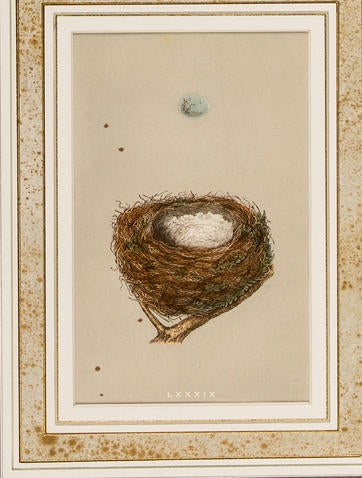 Redpole Nest Egg Print Decor And Accessories